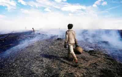Slash & Burn - from BirdLife International