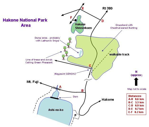 Hakone National Park Map - Chesnut-eared Bunting, Green Pheasant & Latham's Snipe