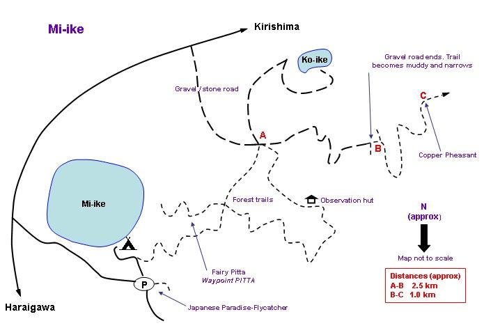 Mi-ike Map - Copper Pheasant, Fairy Pitta & Japanese Paradise-Flycatcher